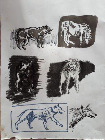 Recherches de loup Dessins 32x24cm